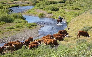 The trail varies during our summer cattle drives